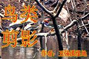 湖南五强溪国家湿地公园鸟类剪影