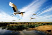 吉林莫莫格国家级自然保护区