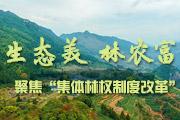 """""""生态美 林农富"""" 聚焦""""集体林权制度改革"""""""