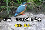 标本:后河保护区鸟类