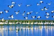 鄱阳湖自然保护区
