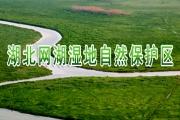 湖北网湖湿地自然保护区