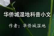 华侨城湿地科普小文