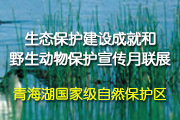 青海湖生态保护建设成就和野生动物保护宣传