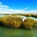 锦州市东方华地城湿地公园